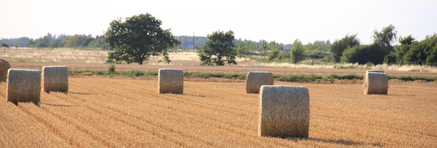Herzlich Willkommen bei der Zukunftsstiftung Rheinische Landwirtschaft